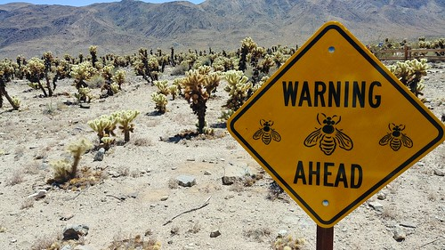Warning! Bees!