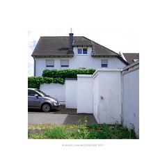 tidy: whitegreen