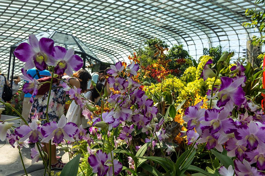 Орхидеи. Flower Dome.