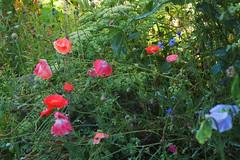 Wet garden 9