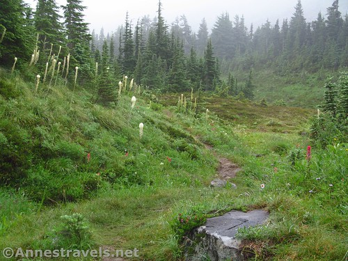 Misty trail up toward McNeil Point in Mt. Hood National Forest, Oregon