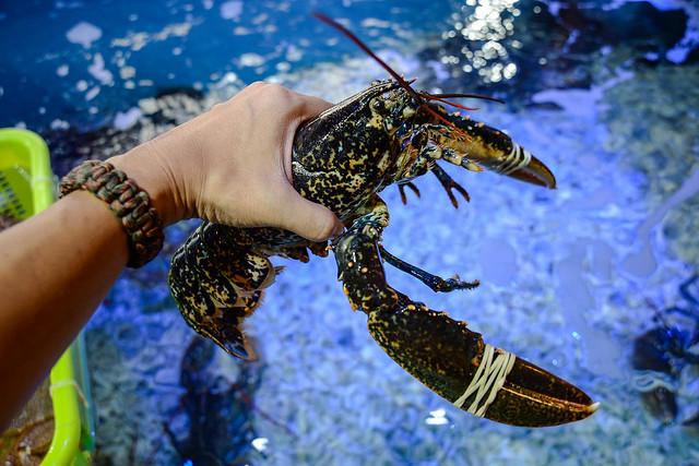 法國藍龍蝦