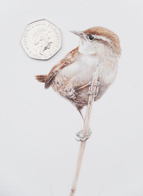 Wren - Bird Painting by Steve Greaves