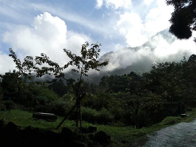 溪頭的山嵐 (6)
