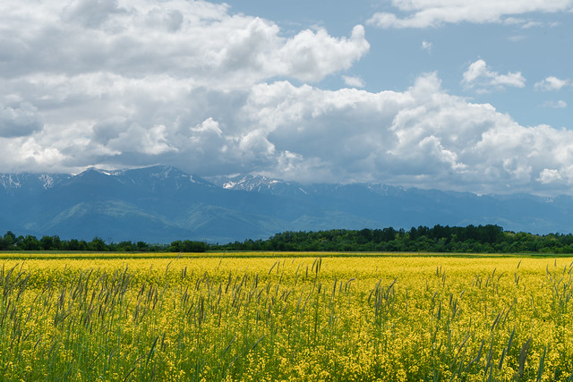 Romania in Bloom