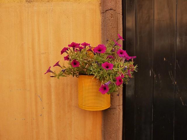 Fiori-flors de la Sardegna