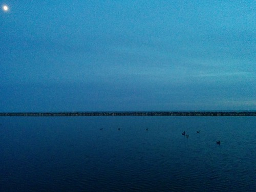 Birds under the moon #toronto #lakeontario #humberbay #marilynbellpark #evening #sky #blue #birds #moon