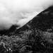 Bosque nublado. Amazonía del Perú. Chontachaka. OXIZONIA-REC by Benya Acame