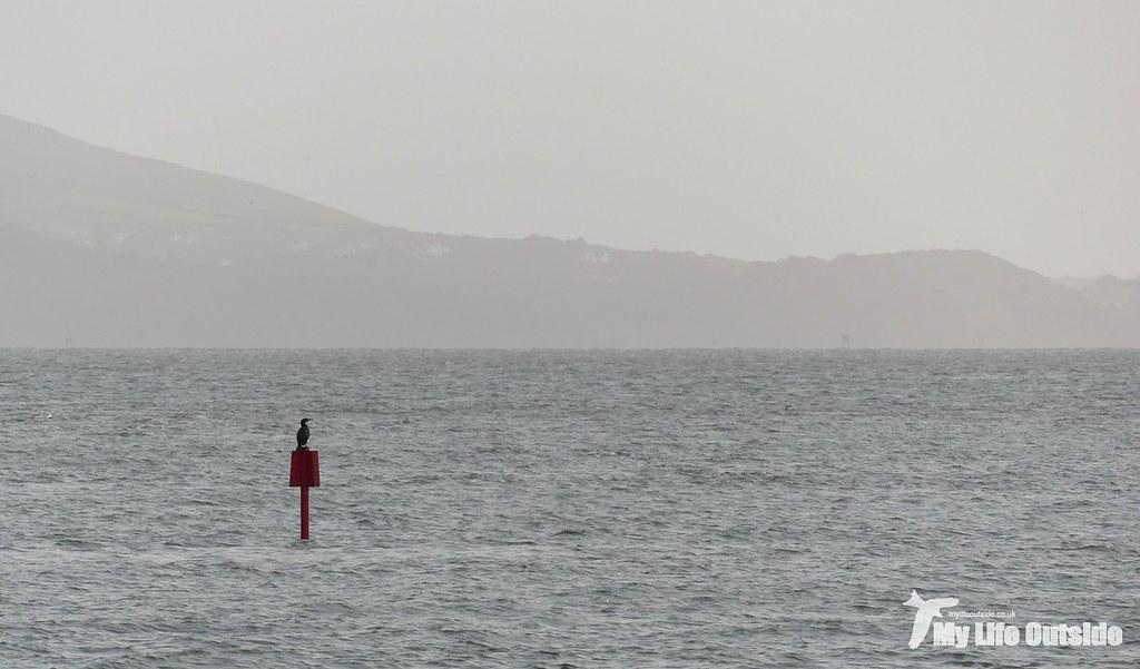 P1120136 - Burry Inlet