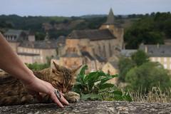 anelli gatti e abbazie