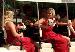 Wedding Party, Cantigny Park. 5 (EOS)
