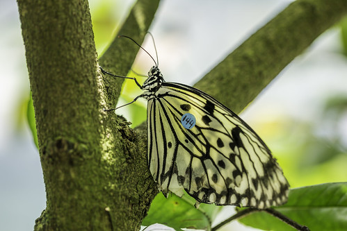 august harriscounty houston houstonmuseumofnaturalscience texas usa animal butterfly green image macro photo photograph f35 mabrycampbell july 2017 july292017 20170729campbellh6a6247 100mm ¹⁄₁₀₀sec 100 ef100mmf28lmacroisusm