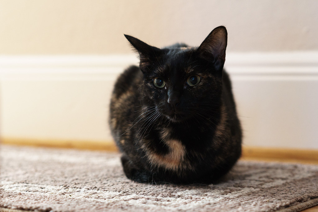 Our cat Trixie sits in the shadows in the hallway outside our bedroom