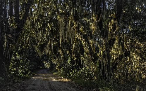 savannah georgia sunrise spanishmoss swamp dawn