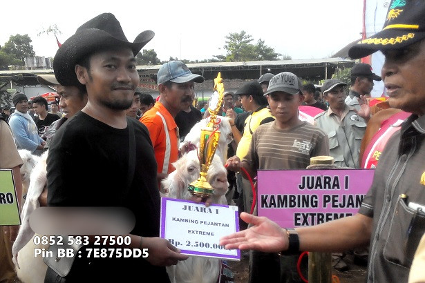 bulldozer-juara-kontes-etawa-extreme-3