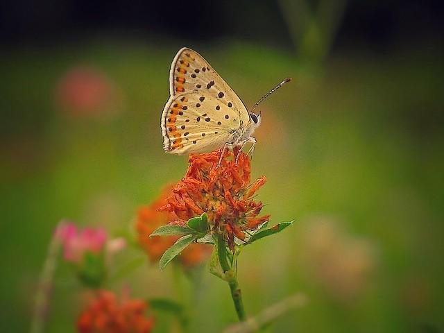Finalmente una farfalla!!