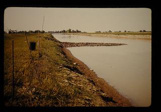 川を渡るアヒル