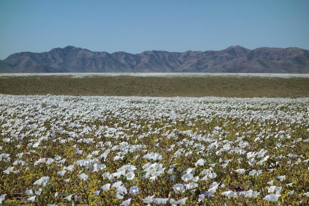 Region III - Desert Fleuri 2