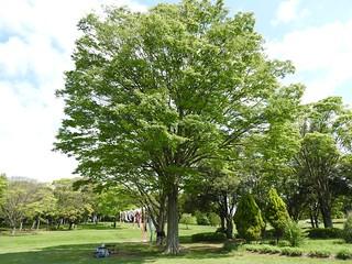 昭和の森 2 木々 08