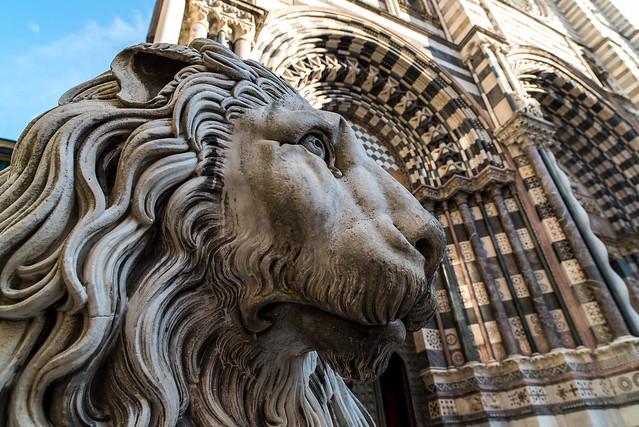 The Lions of San Lorenzo