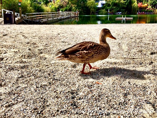 The Duck And The Dock