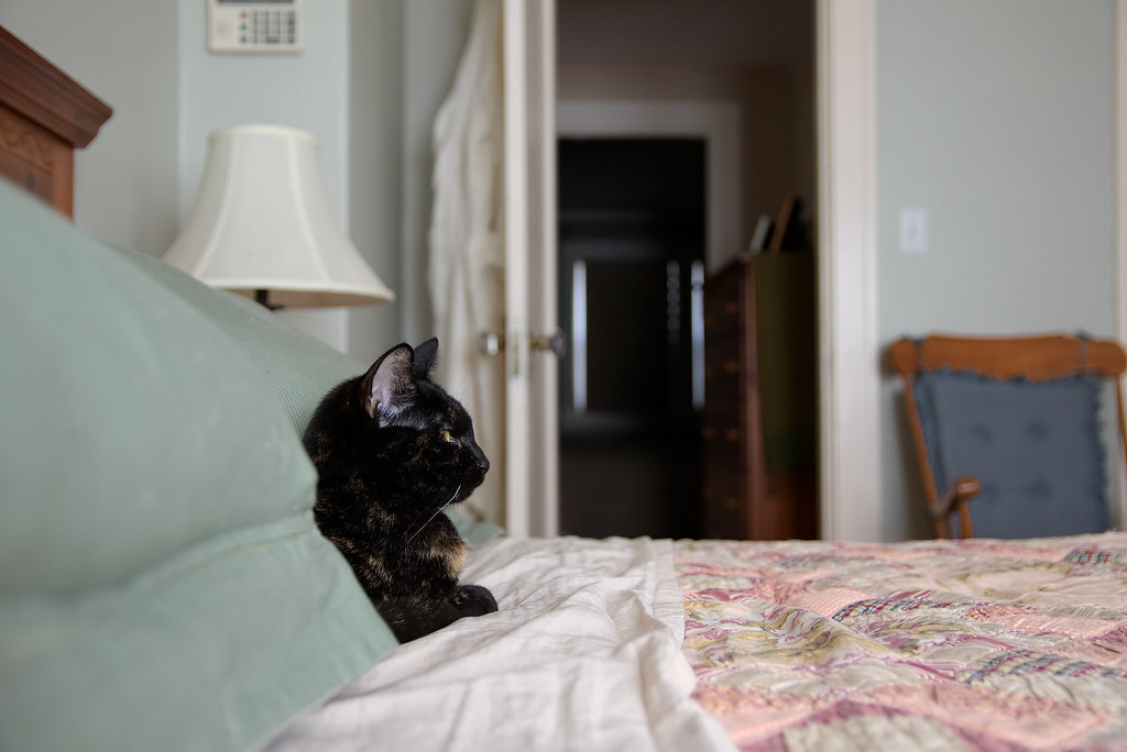 Our cat Trixie rests on our guest bed