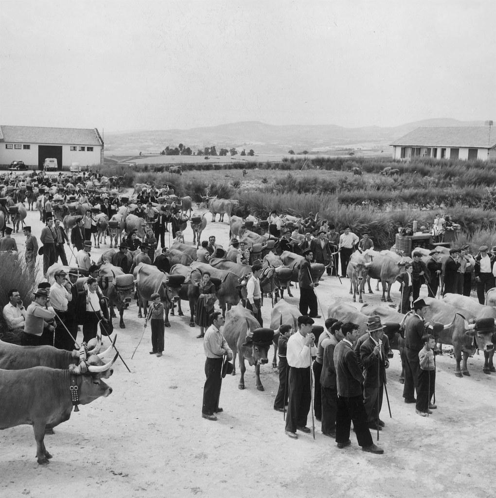 Distribuição de prémios aos colonos, Portugal (A. Pastor, c. 1960)