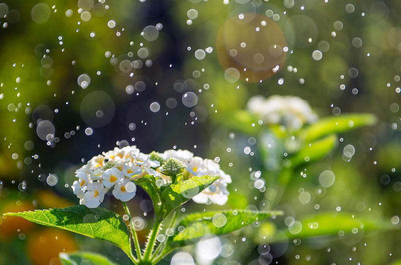 Aqua bubbles / 水漾泡泡