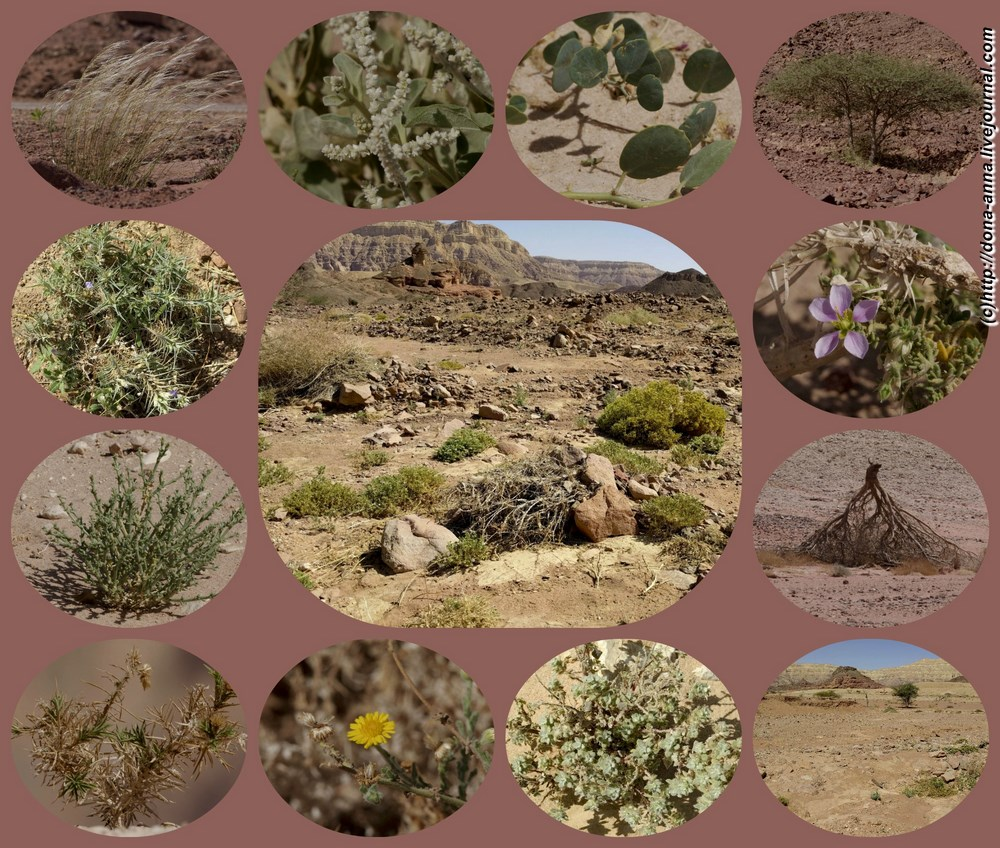 Timna-collage-a