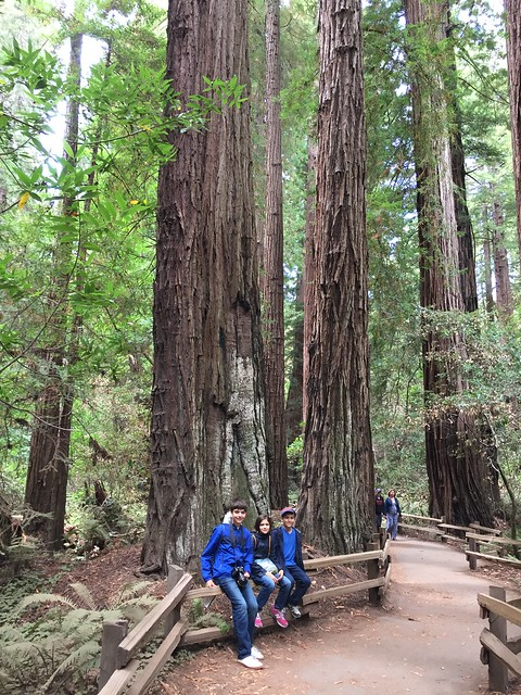 Muir Woods kids in front of trees