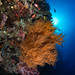 Reefscape, Tubbataha, Philippines