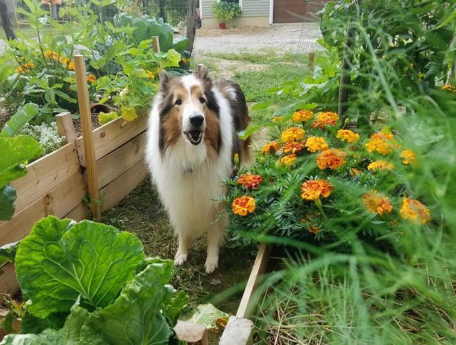 Garden Ben!