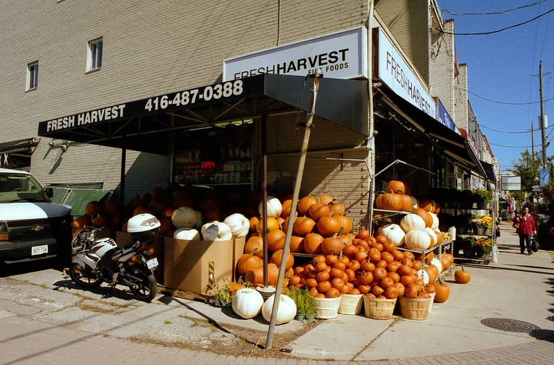 The Pumpkin Pile
