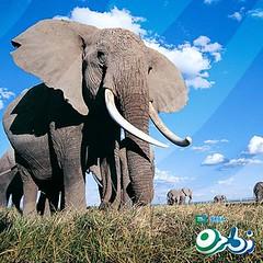 Orbi Dubai - Interesting Animal Facts