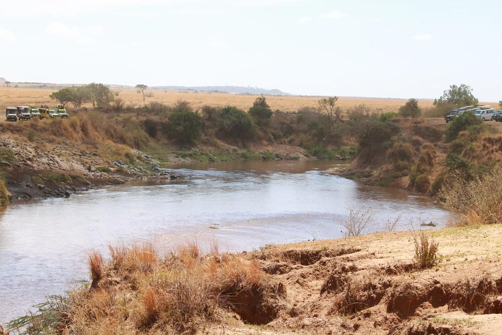 Mara river, safari vehicles lying in wait