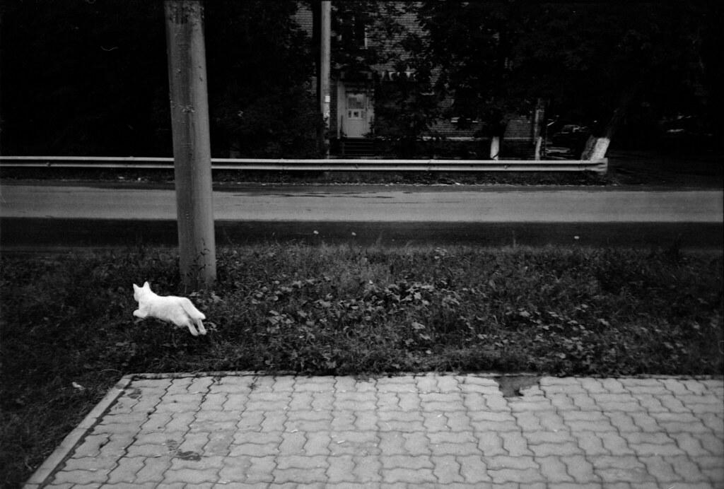 Scan-170806-0075_белый котик_3000