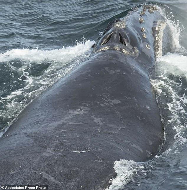 Rare Whale