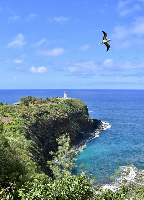 High view, Lighthouse with Red Footed Booby