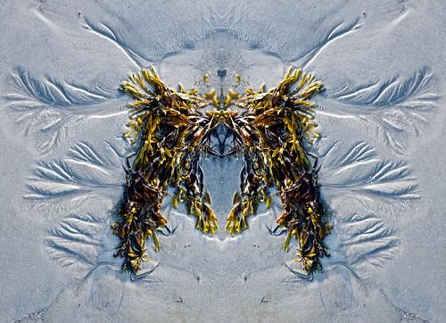 empty wings