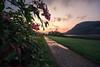 Springkraut im Sonnenaufgang