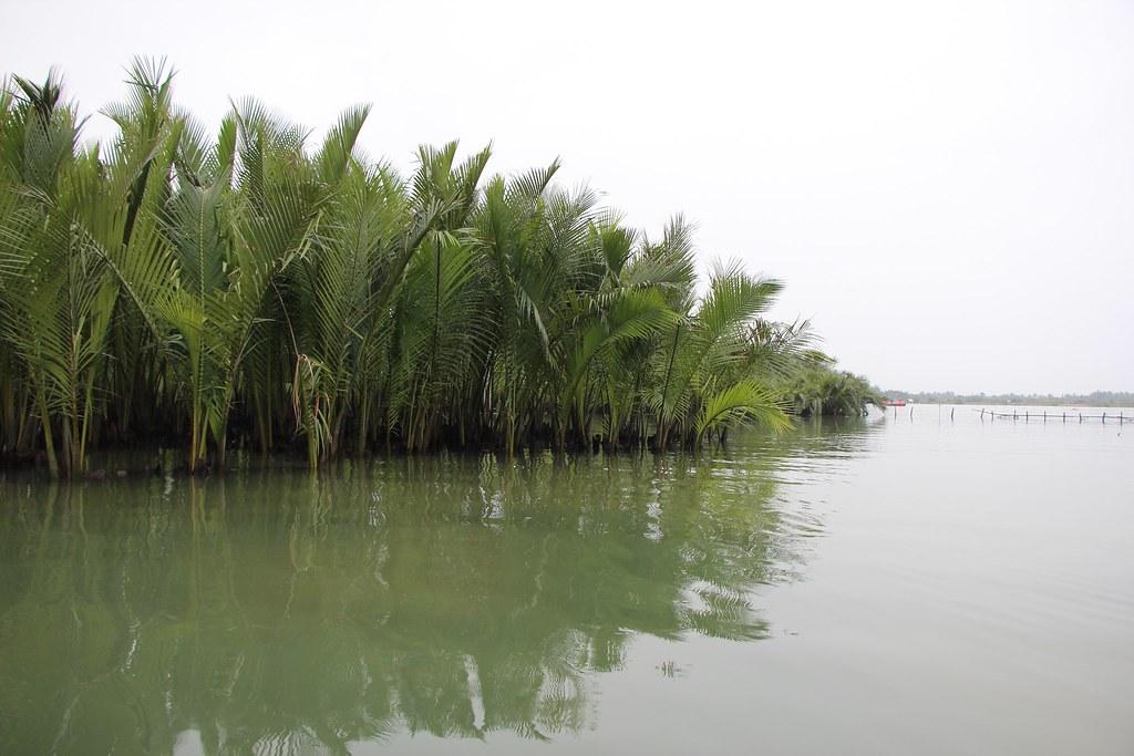 Mangroves of nya palm in Hoi An, Vietnam