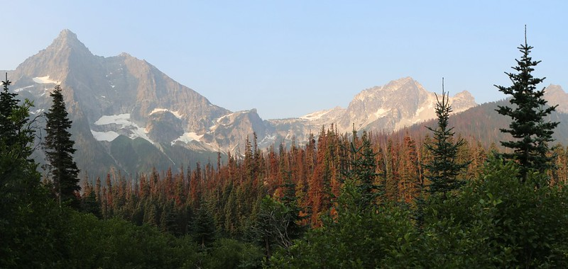 Buck Mountain, Mount Berge, and Mount Cleater above a stand of burnt pine trees on the Buck Creek Trail