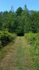 Mown path