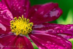 Fleur - Photo of Aire