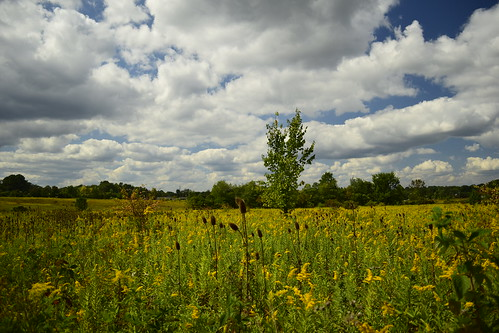 field ohio tallmadge clouds september grass nature outdoors flowers summer fall autumn nikon d5300 dslr