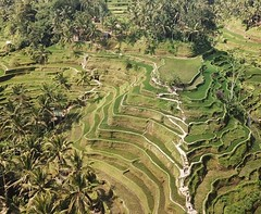 Visited the #telalagang #ricefields and even got to fly my #mavic. What an awesome location to visit. Was stinking hot and the climb out was one to remember