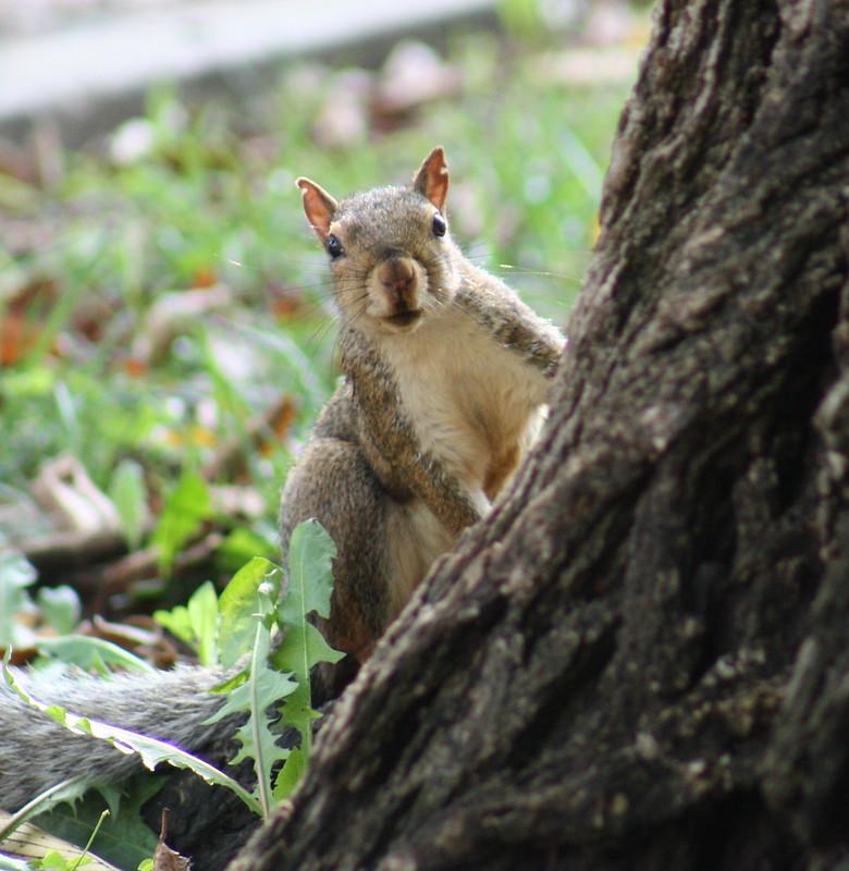 Squirrel Invasion 6