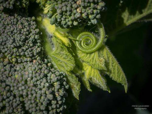 Fabelhaftes Gemüse