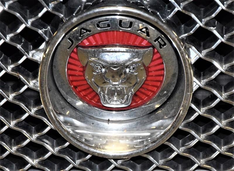 Jaguar 30.08 (3)