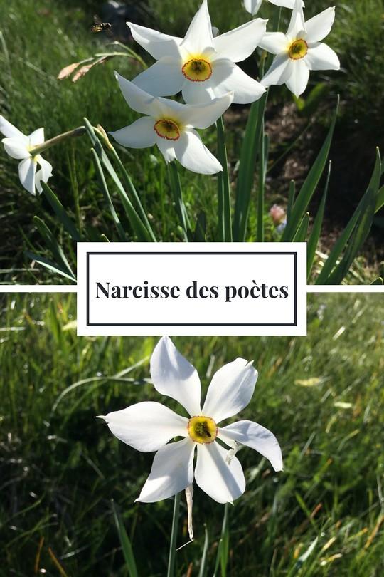 10_Narcisse des poètes
